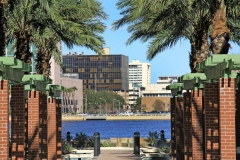 Palm trees and St. Johns River on Southbank